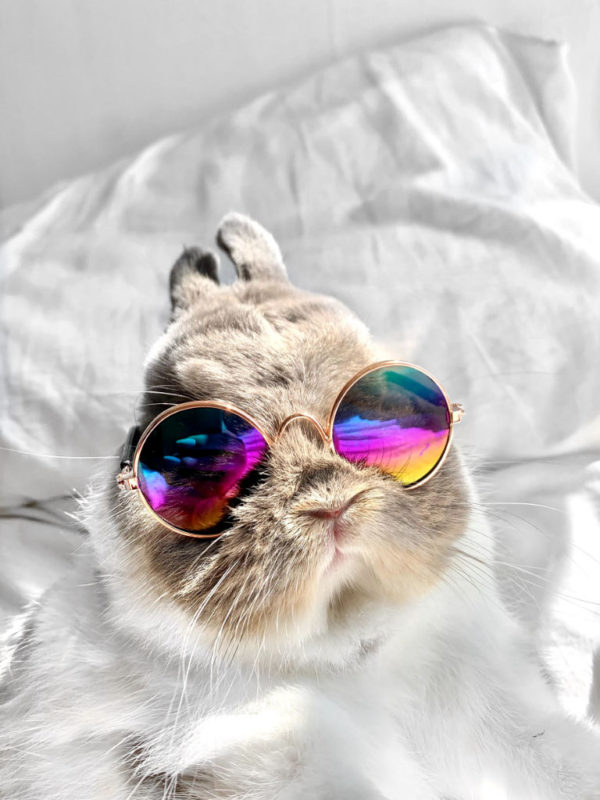 Pet Glasses On Bunny Metalic Rainbow White Background