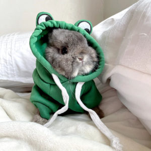 Pet Costume Goof Hoodie Frog Worn On A Bunny