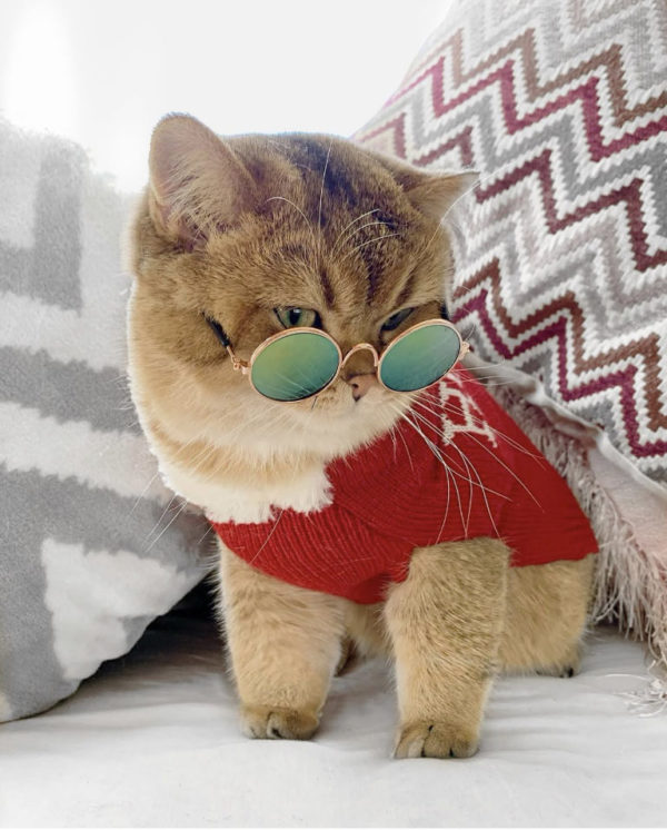 Pet Glasses Worn By Calvin The Cat