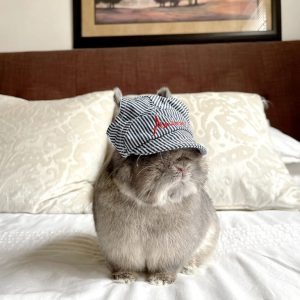 Ananas Pinstripe Baseball Cap Modeled On A Bunny