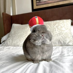 King Crown Design Pet Hat Modeled On A Bunny