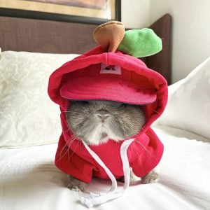 Pet Costume Goof Hoodie Tomato And Simple Pal Sunny Baseball Cap Red On A Bunny