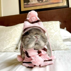 Pet Winter Collection Set Worn On A Bunny