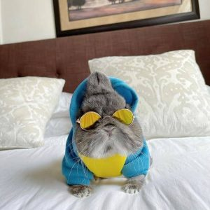 Angry Shark & Divers Pet Hoodie Modeled On A Bunny