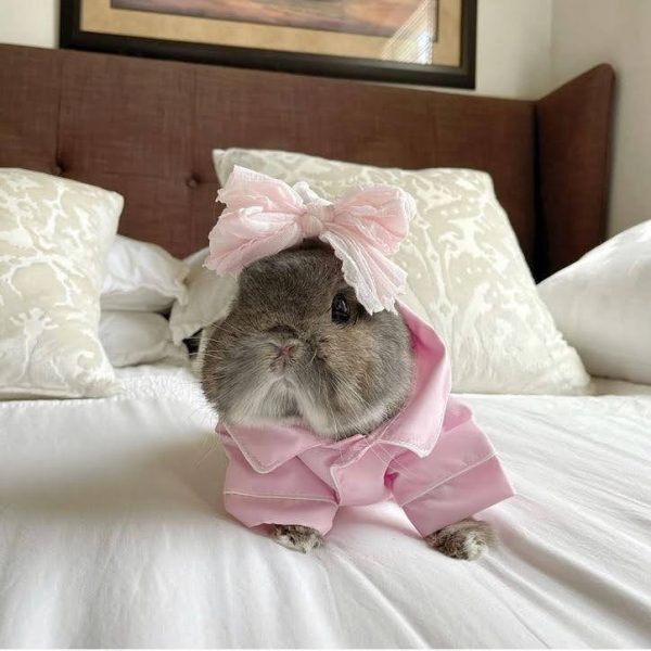 Button Up Pet Formal Shirt Pink & White Modeled On A Bunny Front