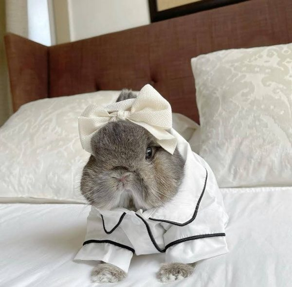 Button Up Pet Formal Shirt White & Black Modeled On A Bunny Front
