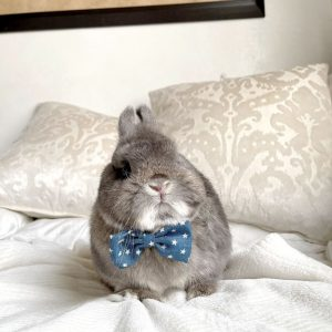 Enchante Pet Collar Small Bow Tie Blue & White Stars On A Bunny
