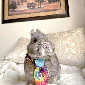 Enchante Pet Collar Small Tie Tie Dye On A Bunny