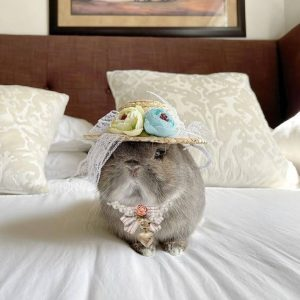 Flower Decor Pet Straw Hat Modeled On A Bunny