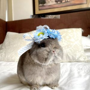 Handcrafted Pet Flower Crown Blue On A Bunny