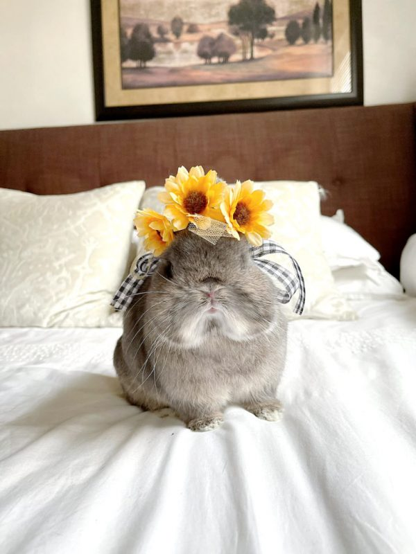 Handcrafted Pet Flower Crown Yellow On A Bunny