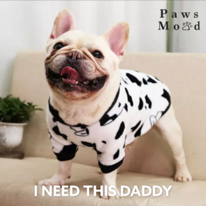 Cutie Creature Fun Sweater Cow Spots On A Dog Front Need This Daddy