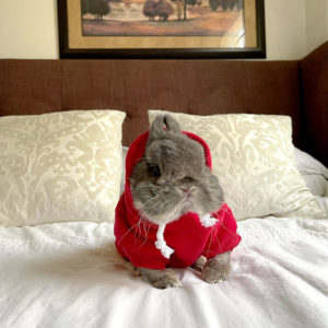 Pet Sport Beast Baby Hoodie Red On A Bunny
