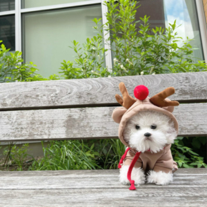 Pet Costume Goof Hoodie Rudolph Modeled On A Dog NYC Bench