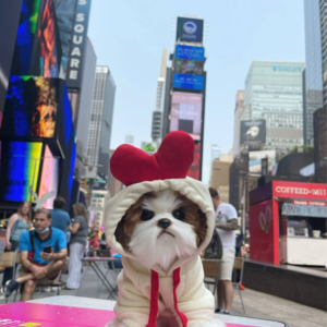 Pet Costume Hoodie Chicken Modeled On A Dog NYC Times Square