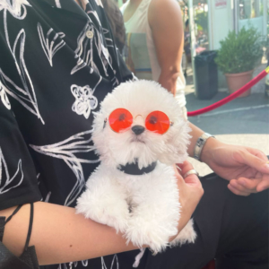 Pet Glasses Red Modeled On A Dog Held In Lap NYC Cabana Lounge