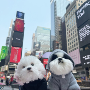 Pet Sport Beast Baby Hoodie Black & Grey Modeled On Dogs NYC Times Square