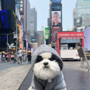 Pet Sport Beast Baby Hoodie Grey Modeled On A Dog NYC Times Square