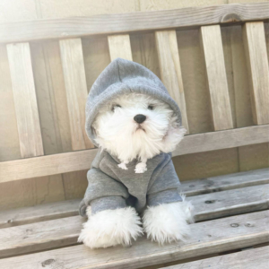 Pet Sport Beast Baby Hoodie Grey Modeled On A Dog On A Bench